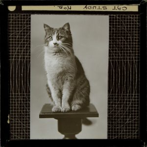 Magic lantern slide photograph of a cat on a wooden pedestal