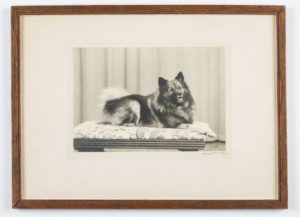 Black-and-white photograph of a dog sitting on a cushion