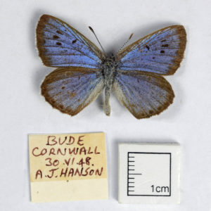 a small blue and back butterfly with a handwritten label next to it