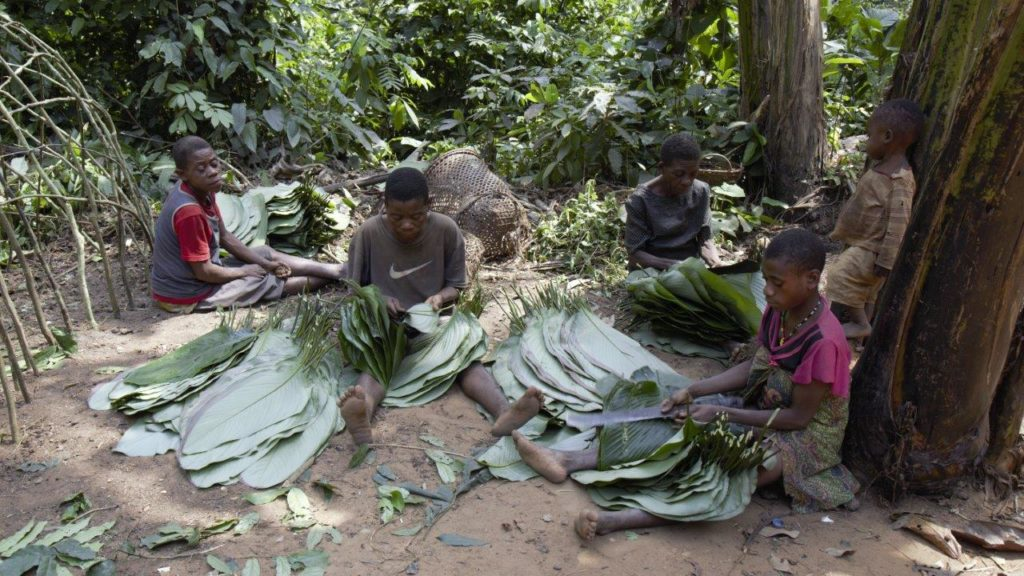 Baka men and women processing leaves with their knives. These maranta leaves (Megaphynium macrostachyum) will be used to create a protective wall on the new hut. © Gordon Clarke, Institute of Nomadic Architecture