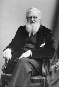 Black and white photograph of Alfred Russel Wallace sitting in a chair.