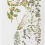 Partly complete watercolour painting of plants by William Keble Martin
