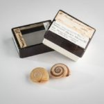 two land snail shells next to a glass topped box