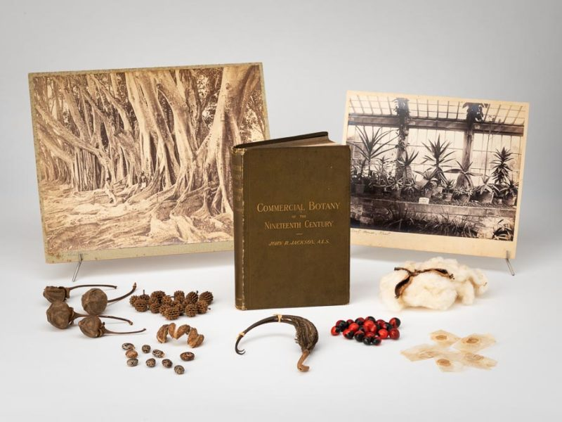 Group of plant seeds, photographs depicting plants and a small book from John Jackson's Economic botany collection.