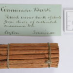 cinnamon bark tied in a neat bundle from AE Palmer's botany collection