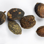 Six oval brown seeds