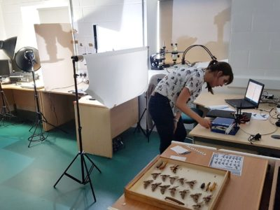 Researcher at RAMM's off site store studying the moth collection